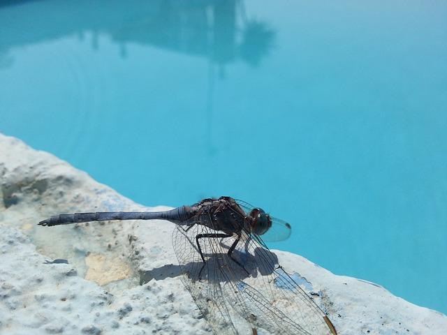 Les répulsifs à insectes pour piscine fonctionnent-ils vraiment